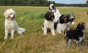 Gruppfoto försök 1. Tilda tycker Pim är en liten fjant som springer och smörar för sin matte...