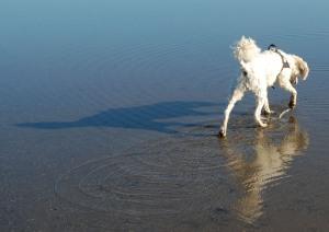 Fin skugga och spegelbild i vattnet