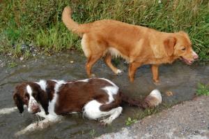 """Daisy njuuuter av att ligga i vattenpölen (till sin mattes stora """"glädje"""" ;))"""