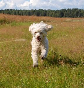 I flygande fläng över vackra sensommarfärgade fälten