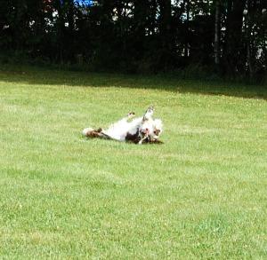 Daisy med sin boll 1