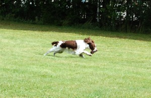 Daisy med sin boll 2
