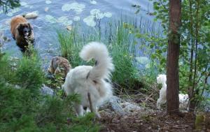 Avsvalkande stund vid sjön