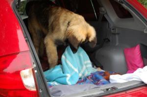 Barnarbete! Killen är minst men måste hålla ordning i bilen...