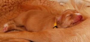 """Lilla """"paddan"""" gul redan en fullfjädrad livsnjutare"""