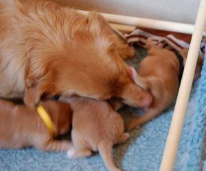 Mamma är duktig och håller efter bäbisarnas intimhygien