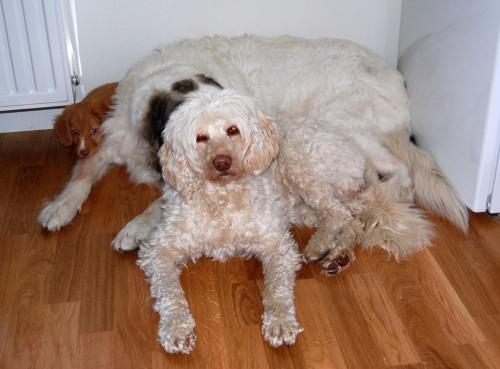 Alla tre vilar tillsammans för första gången - M med huvudet på C:s ben och C med huvudet på T