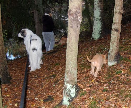 Stor och liten ute i skogen (och Helena och Mido i bakgrunden)