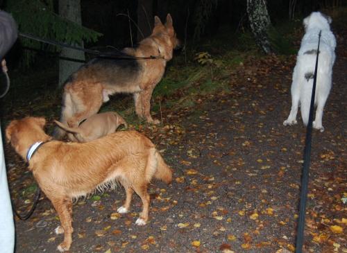 Fyra av fem hundar